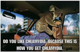 all koala bears have chlamydia album on imgur