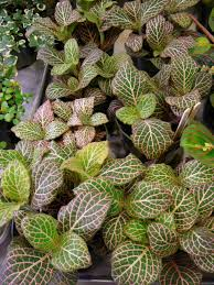 small specimen plants u2013 invite envy from guests palm room