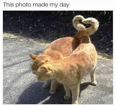 Animal Memes - 42 funny animal memes of day to make you smile funny animal memes