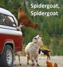 Funny Goat Memes - most funny animal memes and humor pics captions animal and