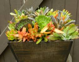 Fall Wedding Table Decor Succulent Centerpiece Succulent Fall Centerpiece Succulent