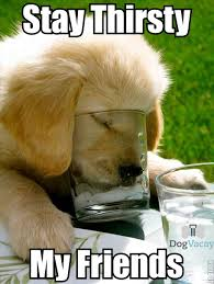 Thirsty Meme - stay thirsty meme copy dogvacay official blog critters