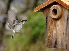 Birds In Your Backyard Nestwatch