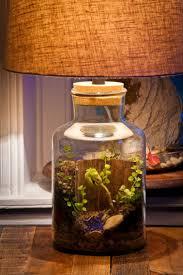 terrarium table best diy terrarium images on pinterest plants airk lamp table