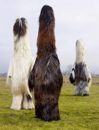 afghan hound creepy scary stories on twitter