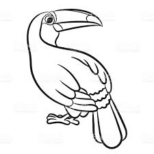 toucan bird illustration coloring page stock vector art 612641742