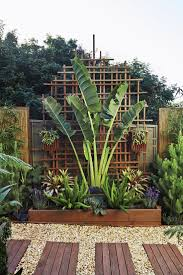 Tropical Backyard Ideas Cool Tropical Backyards About Best 25 Tropical Backyard