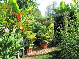 bill u0027s tropical garden in ohio fine gardening