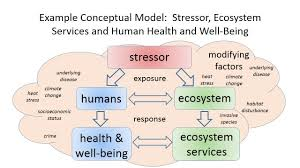 integrating human health and well being with ecosystem services