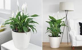 pflanzen für schlafzimmer haus renovierung mit modernem innenarchitektur tolles pflanzen