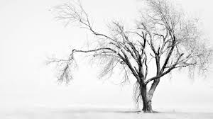 black and white tree pictures