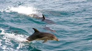 swimming with dolphins tourism australia