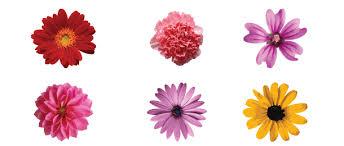 Flower Image Vector Flowers Free Vector Flower Art Flowers Stock Photos
