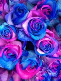 blue and purple flowers purple and pink roses wallpaper blue and purple free