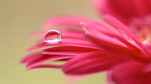 Best Wallpaper Site by Wallpaper Petals Droplet Macro Hd 5k Flowers 5516