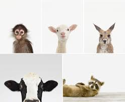 animal print shop honeysuckle life