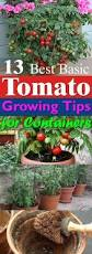 how to grow so many tomatoes in so little space grow tomatoes