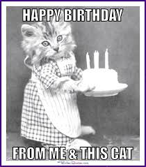 Cat Birthday Memes - happy birthday memes with funny cats dogs and cute animals love