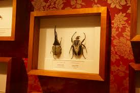 bugs alive melbourne museum