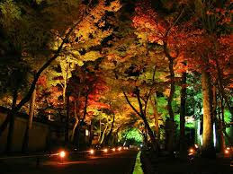 Colored Led Landscape Lighting Landscape Lighting Color All About House Design Secret Of