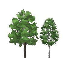 tree symbol vectorworks trees large elevation isymbol