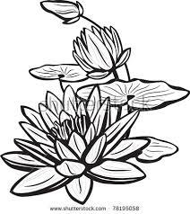 lotus drawing stock images royalty free images u0026 vectors