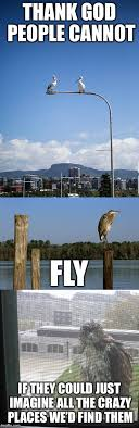Funny Bird Memes - image tagged in so true memes funny birds funny animals imgflip