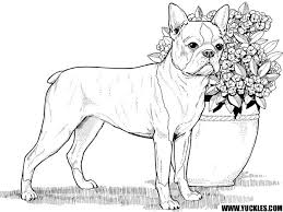 Boston Terrier Coloring Page By Yuckles Coloring Page