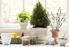 start an indoor herbal tea garden u2013 p u0026g everyday p u0026g everyday
