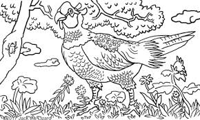 animal coloring pages jack lizard