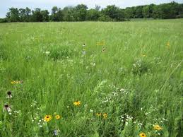 kansas native plants a natural areas inventory of douglas county kansas kelly kindscher