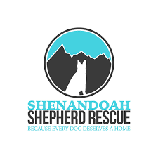 belgian sheepdog rescue ohio shenandoah shepherd rescue u2013 because every dog deserves a home