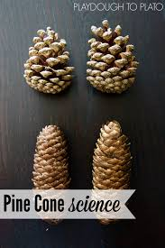 pine cone science playdough to plato