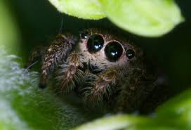 halloween jumping spider you just can u0027t see it smiley faces pinterest sphynx and animal