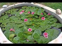Small Backyard Pond Ideas Amazing Small Garden Pond Ideas Youtube