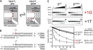interactions between rna polymerase and the u201ccore recognition