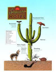 Desert Botanical Garden Restaurant Paul Mirocha Design And Illustration Desert Botanical Garden