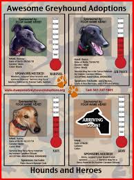 service and therapy dogs u2013 greyhound facts