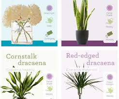 best plants for air quality wonderful houseplants that grow without care easiest houseplants