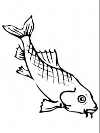 pencil coloring pages asian carp coloring page coquillages pinterest carp