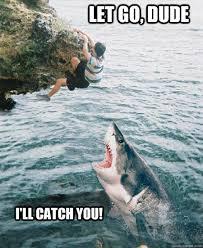 Shark Meme - let go dude i ll catch you sharks know your meme