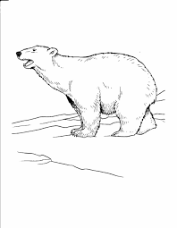 black bear coloring pages page free the polar bear coloring pages polar bear winter olympic