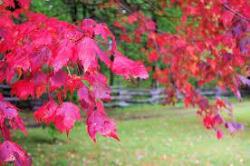 fall foliage color begins nc mountains u2013 asheville nc