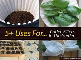 coffee filter uses 5 uses for coffee filters in the garden