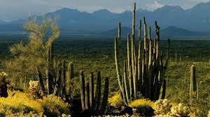 Beautiful Landscape Photos by Landscape Arizona Rolitz