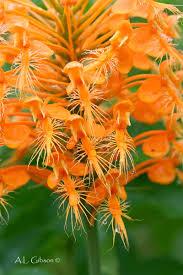 ohio native plants the buckeye botanist 08 01 2011 09 01 2011