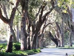 Sea Island Cottage Rentals by 8 Best St Simons Island Ga Beach Rentals Images On Pinterest