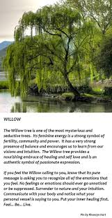 the willow tree illustrated above is represented by the death of