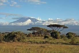 Tropical Savanna Dominant Plants - savanna biome animal facts and information
