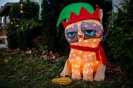 grumpy cat tuna